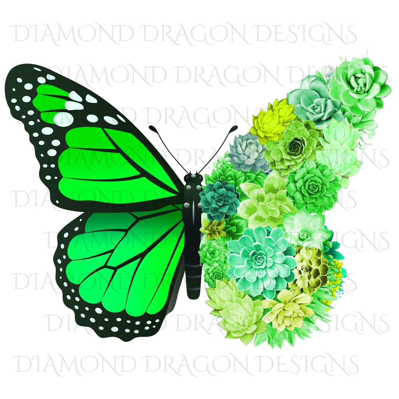 Butterfly - Succulent Butterfly, Green Monarch Butterfly, Watercolor Butterfly, Butterfly with Succulents, Digital Image