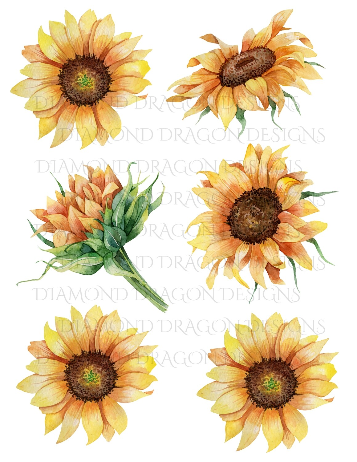 Sunflowers - Whole Sunflower, Watercolor Sunflowers, 6 Image Bundle, Waterslide
