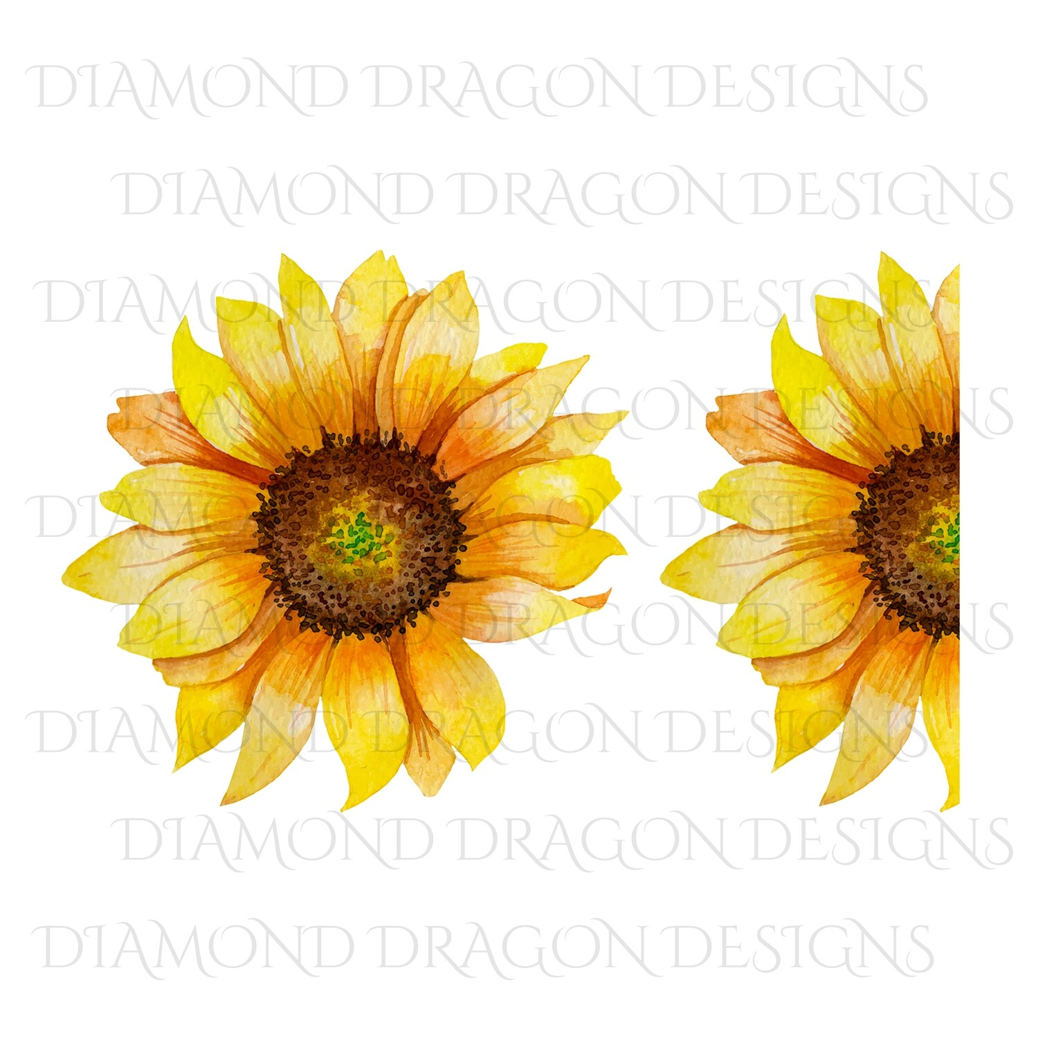 Sunflowers - Whole Sunflower, Half Sunflower, 2 Image Bundle, Watercolor Sunflower