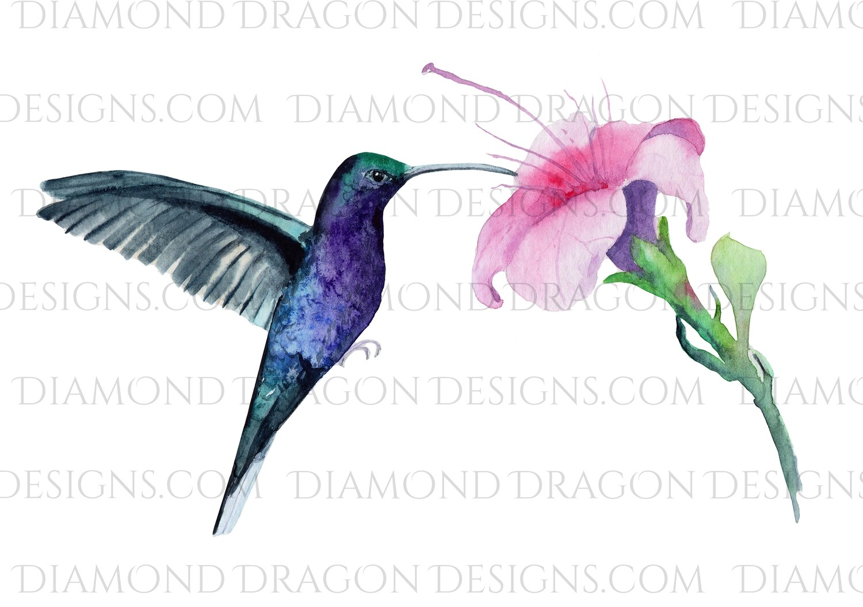 Birds - Watercolor Humming Bird & Flower, Waterslide