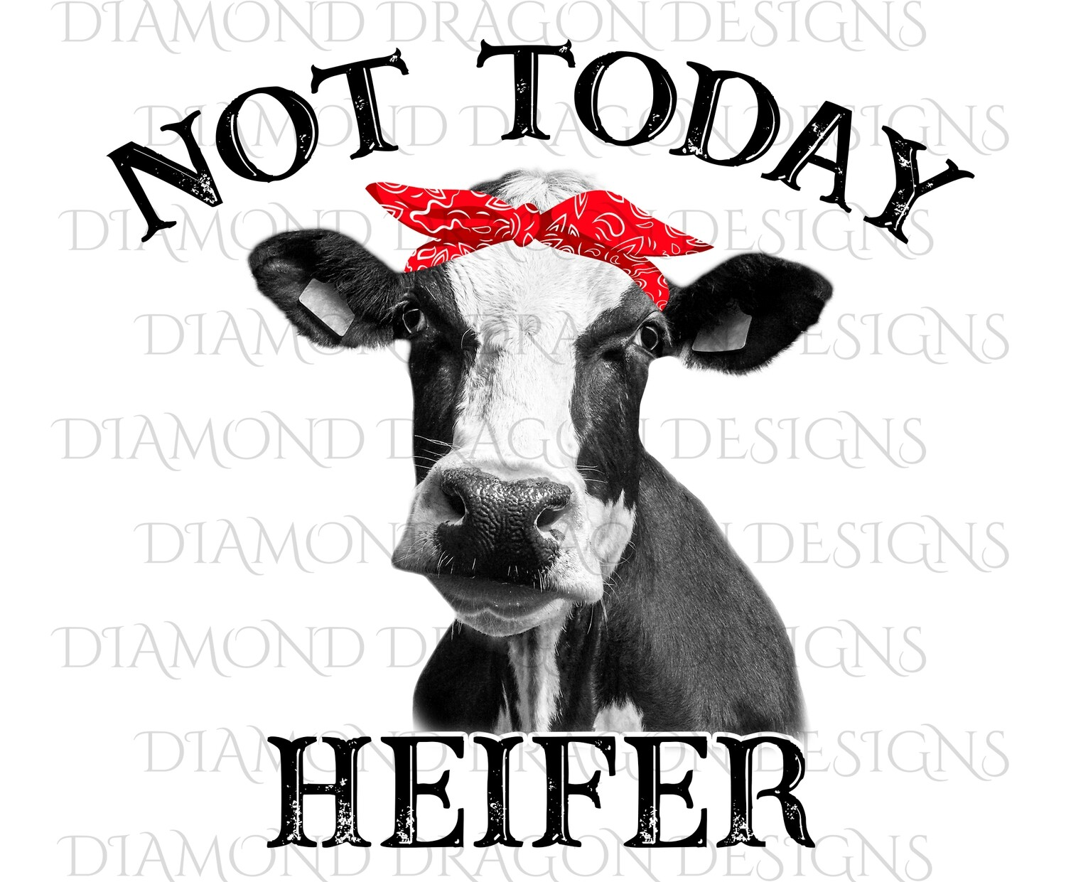 Cows - Heifer, Not Today Heifer, Red Bandana, Black White Cow, Digital Image