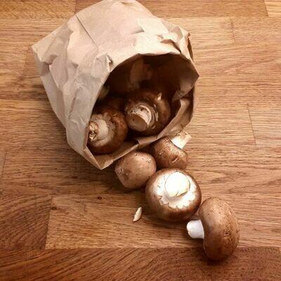 Jumbo Brown Mushrooms