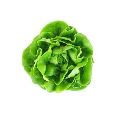Hidroponic Butter Lettuce, Unit