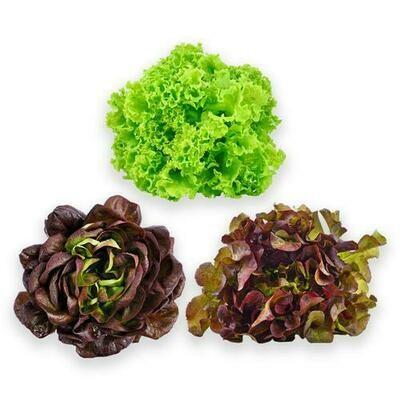 Lettuce Mix, 1 Unit