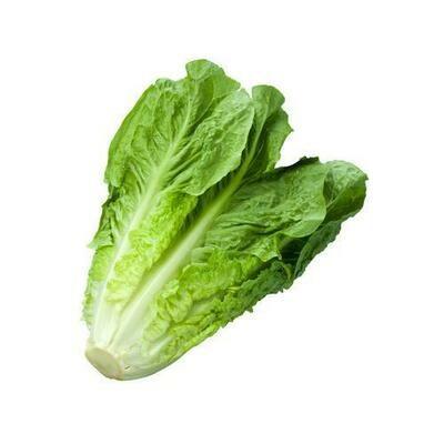 Romaine Lettuce, 454 g / 1 lb