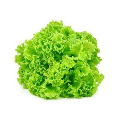 Organic American Lettuce, 2 Units
