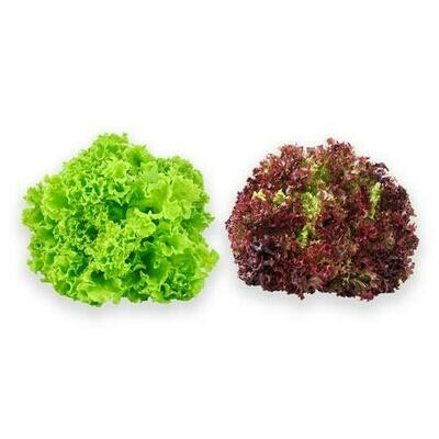 Organic Mixed Lettuce, 2 Units