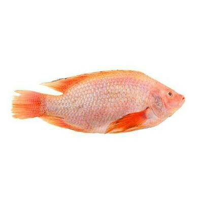 Sea Gallery Chilled Whole Red Tilapia, Tray Pack
