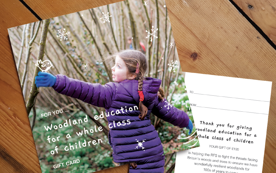 Christmas - Woodland Education for a Whole Class