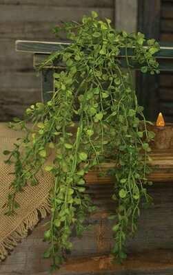 Hanging Baby Grass