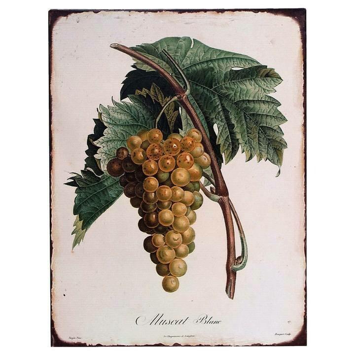 Vintage Botanical Grape Tin Sign