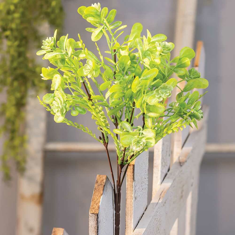 Green Buds Succulent Bush