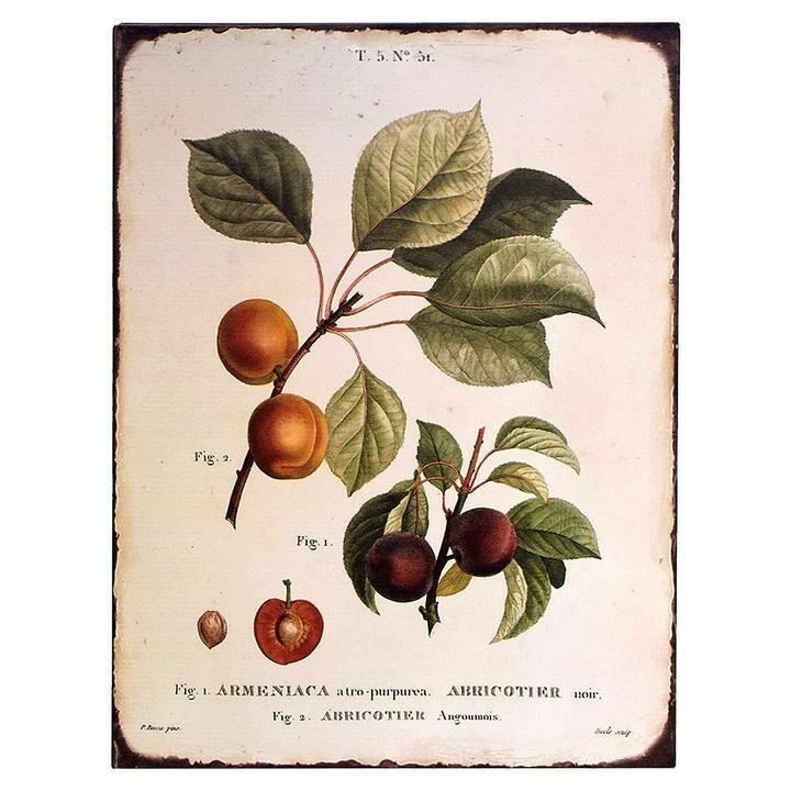 Vintage Botanical Peach Tin Sign