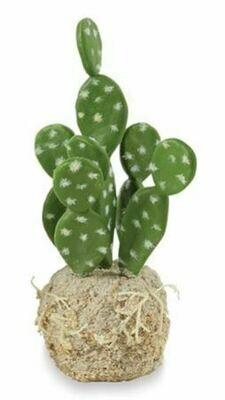 Tall Cactus Drop In