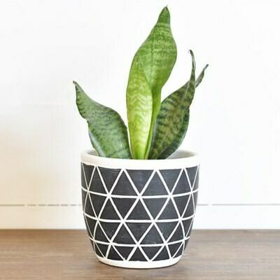 Lg Black Triangle Pot
