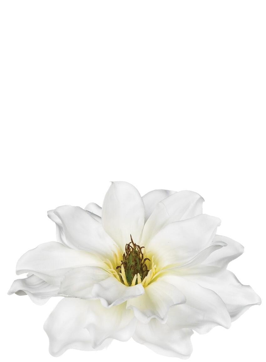Floating Magnolia Flower