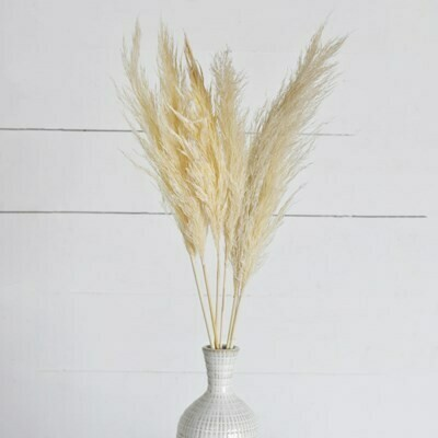 Natural Pampas Stem Bundle