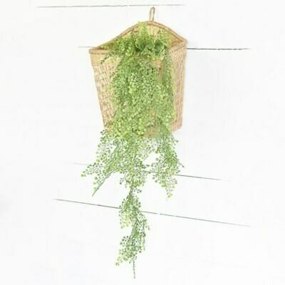 Fan Grass Hanging Bush