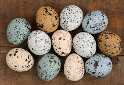 Set of 12 Speckled Eggs