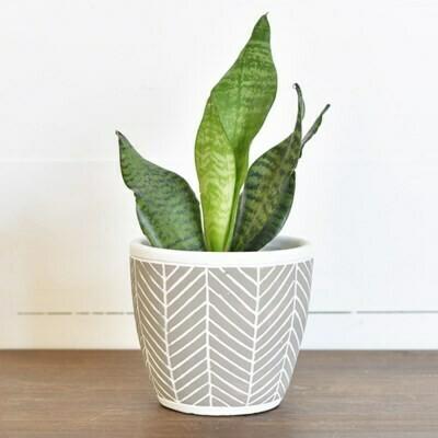 Lg Gray Chevron Striped Pot