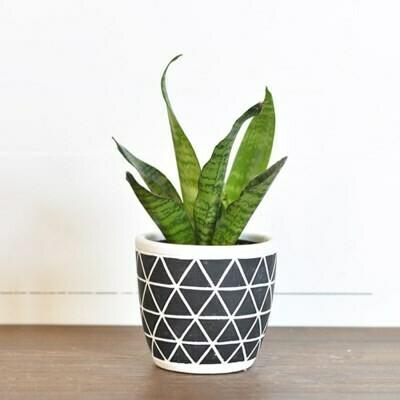 Sm Black Triangle Pot