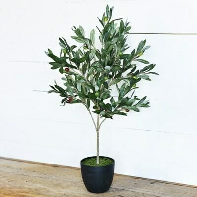 Olive Tree w Pot