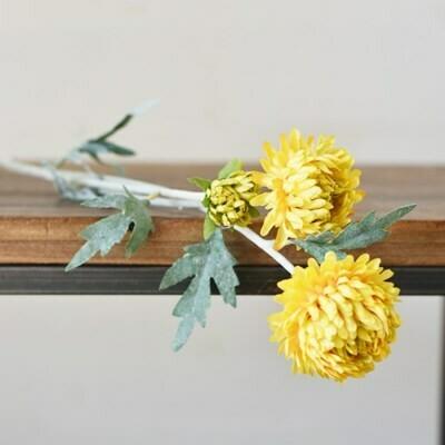 Tall Yellow Chrysanthemum Stem