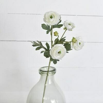 White Ranunculus Stem