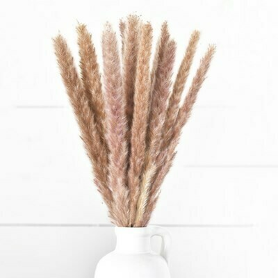 Brown Pampas Bundle