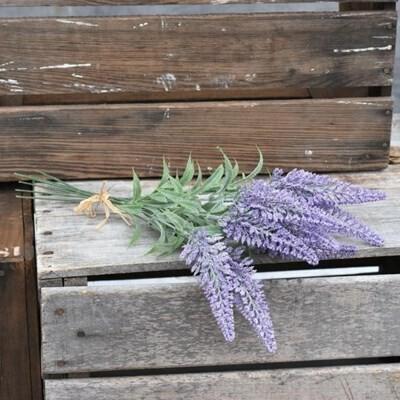 Purple Cone Flower Bunch