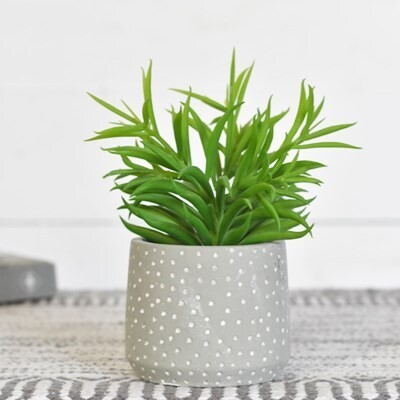 Succulent In Gray Dot Pot