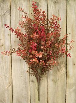 Red Baby Grass Bush
