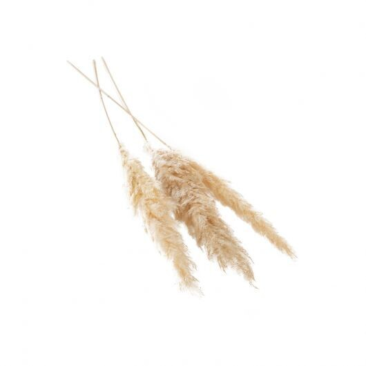 Lg Cream Pampas Grass Bundle