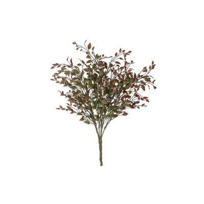 Red Bean Sprout Bush