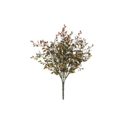 Fall Bean Sprout Bush