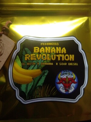 🍌 banana revolution 5pk FEM