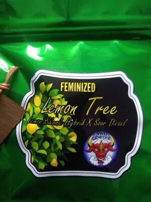 🍋 LEMON TREE 5 pk FEM