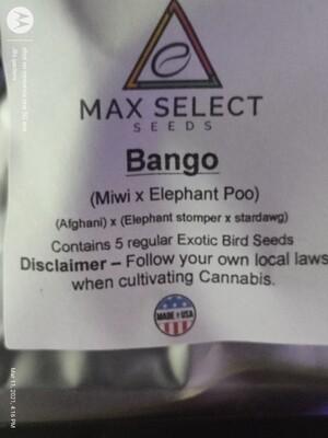 BANGO 💥🧨💥