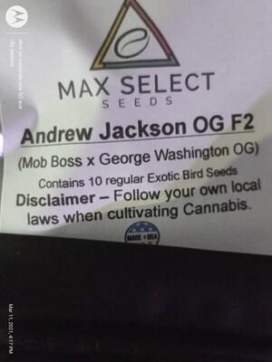 Andrew Jackson OG f2 🧔