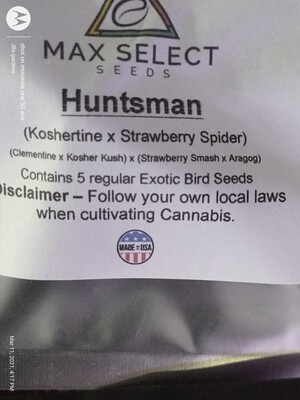 HUNTSMAN 🏹