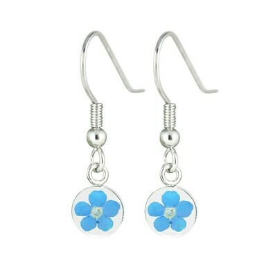 Real Forget-Me-Not, Small Circle Earrings, White Background