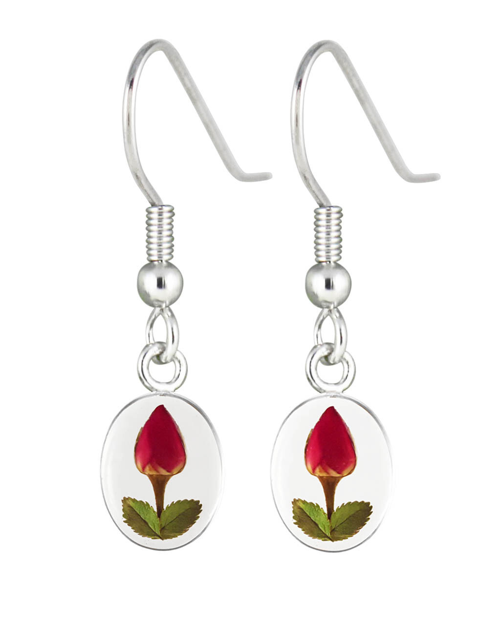 Real Rose Oval Earrings, Transparent Background.