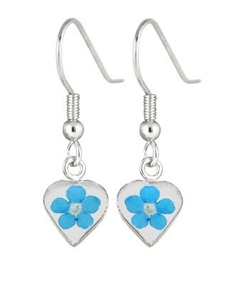 Real Forget-Me-Not, Small Heart Earrings, White Background