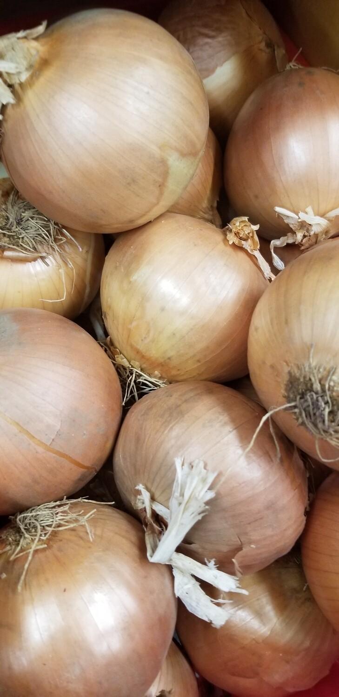 Onions Brown 1lb