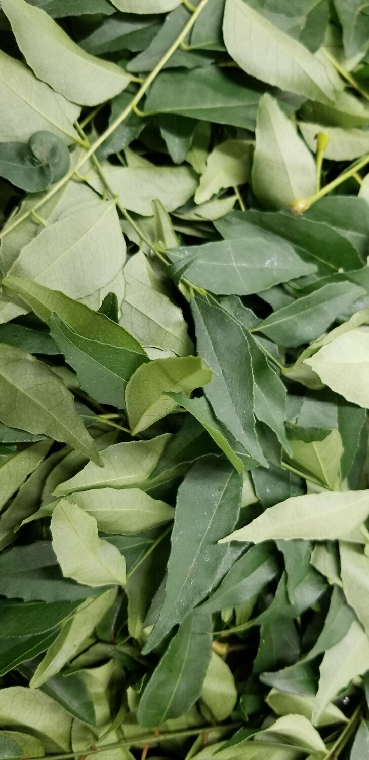 Curry Leaves (Pack) Each