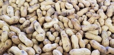 Roasted Peanuts 1 bag (1lb)