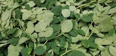 Drumstick Leaves/Moringa (Pack) Each