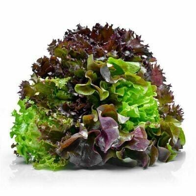 Mixed Lettuce 180g
