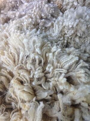 Exmoor Mule Wether half fleece