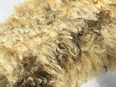 Bluefaced leicester shearling ewe fleece 'Nellie'